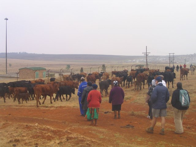Developing skills for livestock production