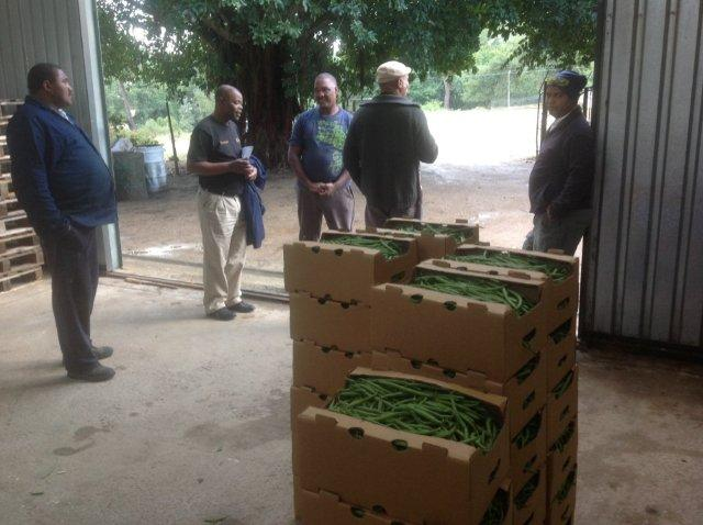 Vegetable growers at Genadendal